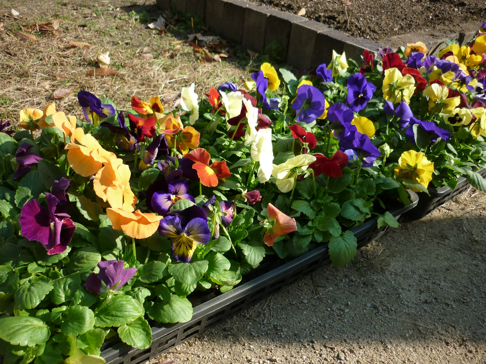 【スタッフ日記】お花を植えるお手伝い
