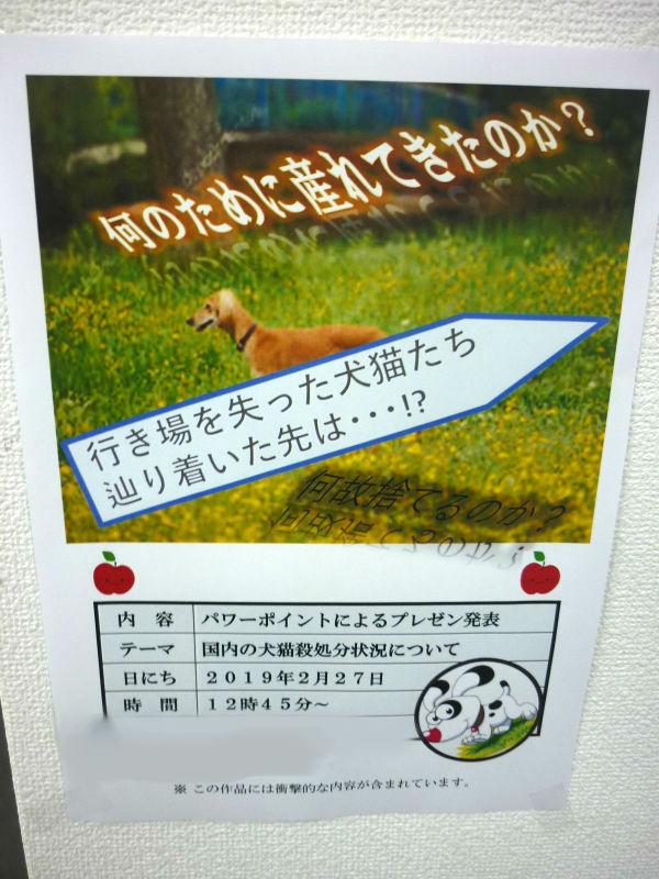 【プレゼンテーション発表】犬猫の殺処分について